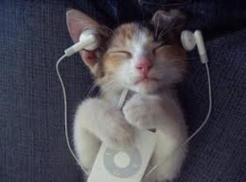 kitty listening